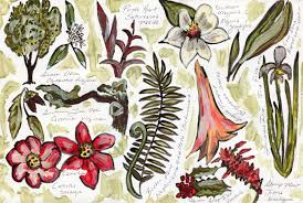 native plants of michigan visual guide to native new orleans plants nola tour guy