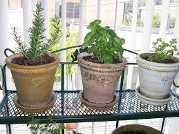 garden ideas small indoor herb garden image of indoor herb