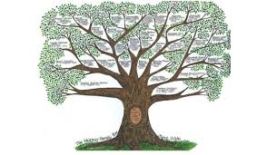 luce you can change your education family tree