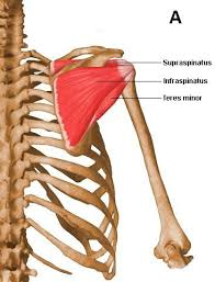 Tendons In The Shoulder Diagram Arthroscopic Shoulder Surgery For The Treatment Of Rotator Cuff