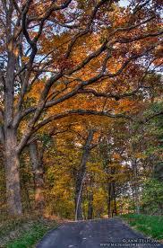 fall color michigan sweet spot
