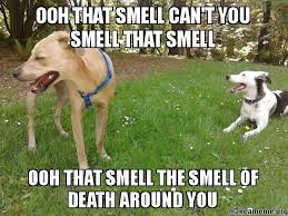 Galileo Meme - ooh that smell can t you smell that smell ooh that smell the smell