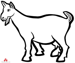 goat clipart outline pencil and in color goat clipart outline