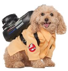 matching dog and owner halloween costumes amazon com ghostbusters movie pet costume large ghostbuster