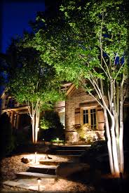 beautiful landscape lighting shot of this mature crape myrtles by