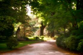 landscape path light free images tree nature forest path light night lawn