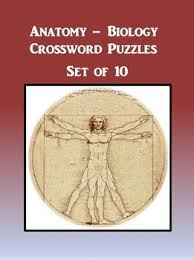 Anatomy And Physiology Games And Puzzles Crossword Anatomy Biology Crossword Puzzles Set Of 10 By The Teacher Team Tpt