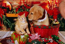 golden retriever puppy in basket and orange kitten on
