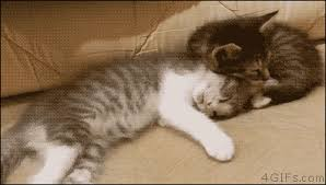 Sleepy Kitty Meme - the afternoon pic me up sleepy cat gifs and funny gifs