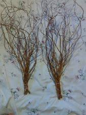 Curly Willow Branches Wooden Floral Décor Ebay