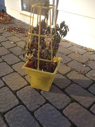Potted Patio Trees two it yourself 2 diy small potted christmas trees from patio