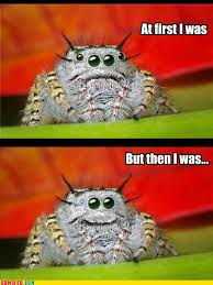 Sad Spider Meme - itt misunderstood spider meme bodybuilding com forums