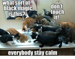 Stay Calm Meme - what sort of dont touch is this it everybody stay calm meme on