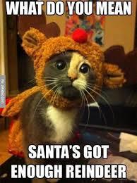 Holiday Memes - top 10 cat mas holiday memes memes and cat