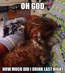 Funny Hangover Memes - hangover cat weknowmemes