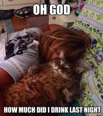 Hangover Memes - hangover cat weknowmemes