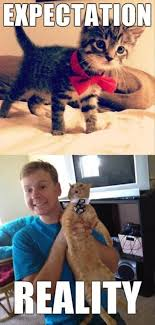 Expectation Vs Reality Meme - cats in bow ties expectations vs reality lolbook