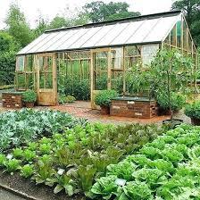 Raised Gardens Ideas Large Vegetable Garden Image For Best Vegetable Gardening