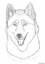 husky coloring pages coloring pages