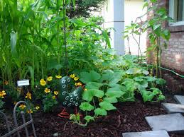outdoor and patio small backyard vegetable garden ideas in three