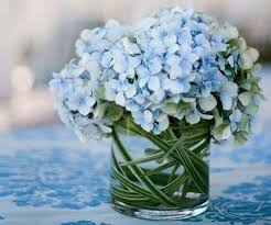 wholesale hydrangeas buy wholesale hydrangeas flowers whole blossoms