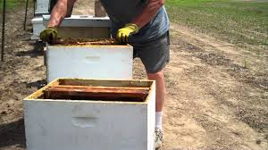 how to split a beehive easiest method by tim durham youtube