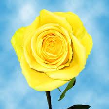 global roses varieties global