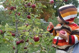 20 pick your own apple orchards to check out this fall near cleveland