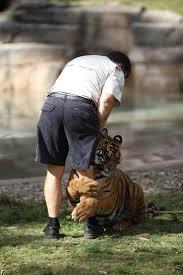 tiger leg hug 1funny com