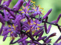 bush bernie u0027s blog another early winter flower flaunt friday