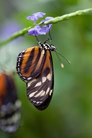 tripod photography butterfly pavilion