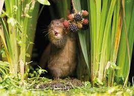 where to buy a calendar where can i buy the countryfile calendar 2017 and how much goes to