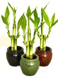 indoor plant the best indoor plants for beginners indoor plant tips com