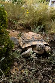 1199 best turtles images on pinterest terrapin sea turtles and