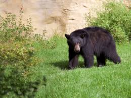oc zoo welcomes new bear elinor oc mom blog
