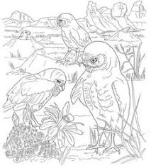 free color pages real owls coloring page great horned owl to
