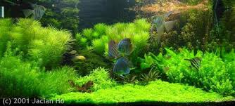 Nature Aquascape Pics Collection Of Truly Inspired Aquascape Kinds Of Ornamental