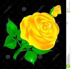 dark and yellow rose stock vector image 90363211