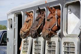 How To Tell If A Horse Is Blind An Open Letter To Drivers Who Aren U0027t Horse People At Home With