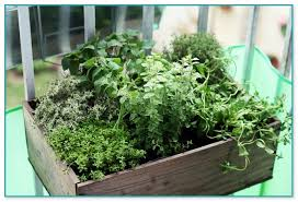 vertical garden containers for sale