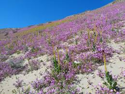 arizona native plants list programs natural resources native plant communities about