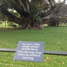 Tree Meme - this tree doesnt fuck around meme guy