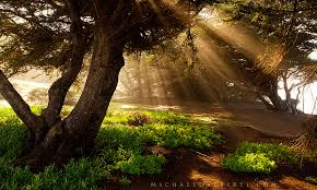 California forest images Enchanted forest california coast michael dalberti photography jpg