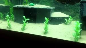 home made slate caves for aquarium youtube