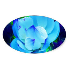 Blue Lotus Flower Meaning - meaning of flowers stickers zazzle