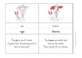 Lotus Flower Parts - parts of a lotus by the montessori garden teachers pay teachers