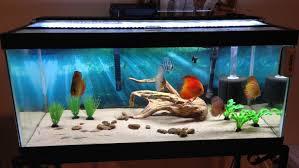 interior design cool aquarium decoration themes home interior