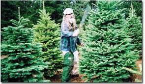 wholesale noble fir trees