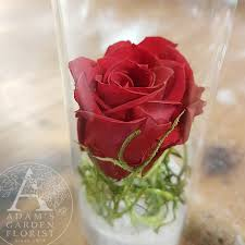 preserved roses preserved in glass adam s garden florist