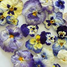 real pansies dry flowers purple blue flowers pansies cake